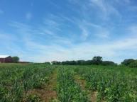 rvr-farm